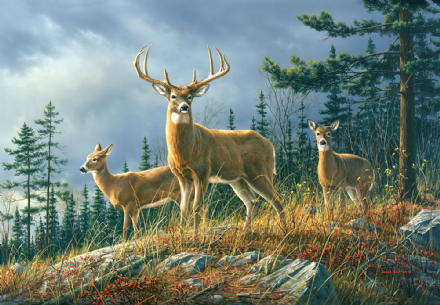 Photo wallpaper Autumn Whitetails
